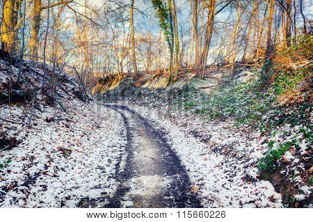 Winter Landscape With Snow Covered Country Road