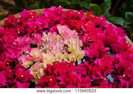 Painting In Vase Made Of Colorful Bougainvilleas Flowers