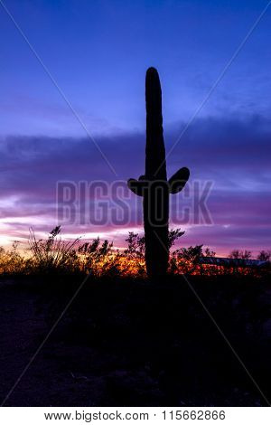 An image of a saguaro cactus during a colorful sunset at Superstition desert in Arizona highlights the lonely darkness of a dry, parched wilderness