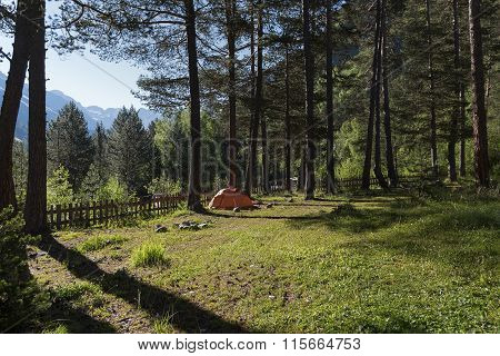 Orange Tent In A Pine Forest