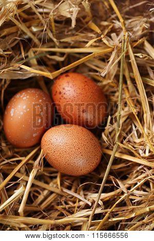 chicken eggs, top view
