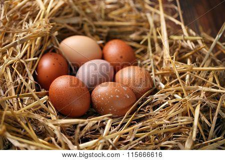 chicken eggs in nest