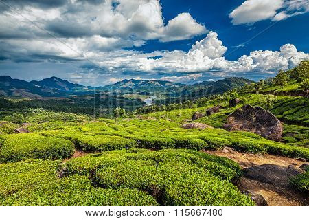 Tea plantations and Muthirappuzhayar River in hills near Munnar, Kerala, India