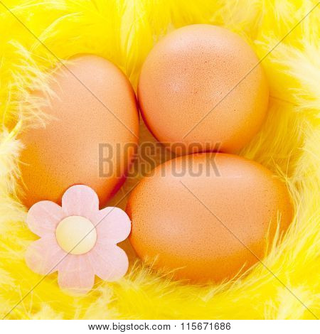 Easter Chicken Eggs