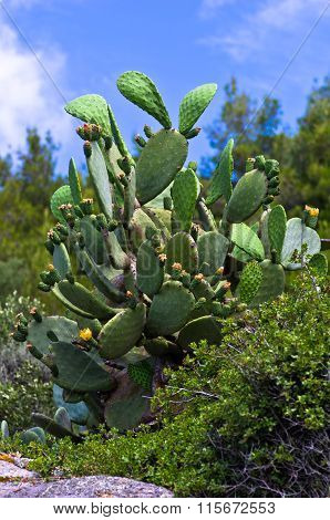 Closeup of a green cactus with a small yellow flowers