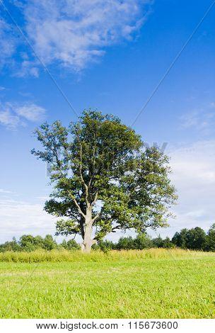 Calm Solitude Lonely Tree