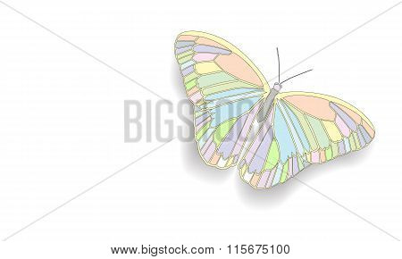 Butterfly With Open Wings