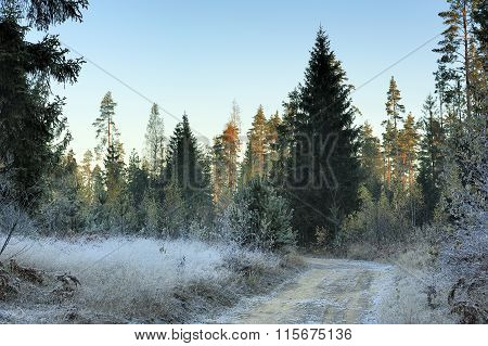 First Frost In The Forest