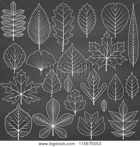 Set of tree leaves on chalkboard background. Twenty different icons. Various elements for design. Ca