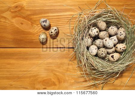 The Composition Of Quail Eggs Lying In A Nest Of Grass On A Panel Of Vintage Brown Boards With Free