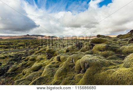Mossy Lava Rock Filed In Iceland