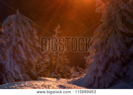 Fairy Dust In A Magical Winter Story. Sunrise At The Top Of Postavarul Mountain. Brasov Romania. Low