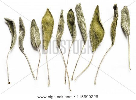Dry Sage Leaves (salvia)