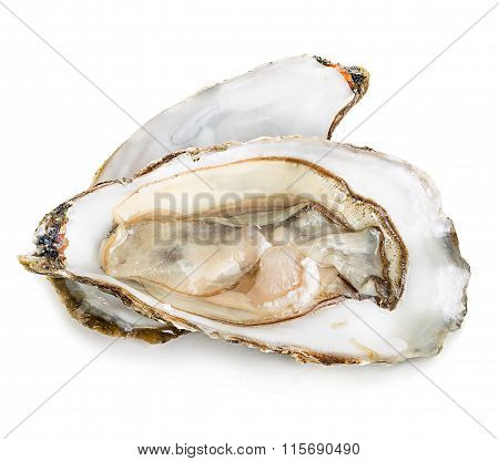 Oysters With Pearls Isolated On White Background