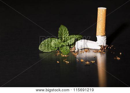 End Of Mint Cigarette, Closeup