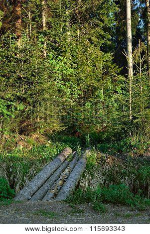 Walkway across ravine.