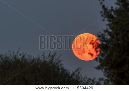 Red Blood Moon At Blue Twilight Sky