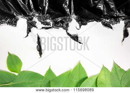 Green Leaves And Black Plastic On A White Background