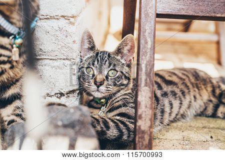 Striped Tabby Cat Lying Watching The Camera
