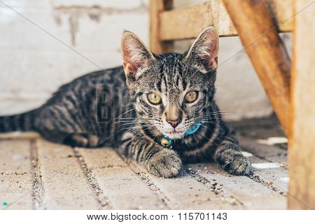 Young Striped Tabby Cat Staring At The Camera