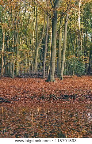 Autumn Forest With Ground Covered In Orange Leaves.