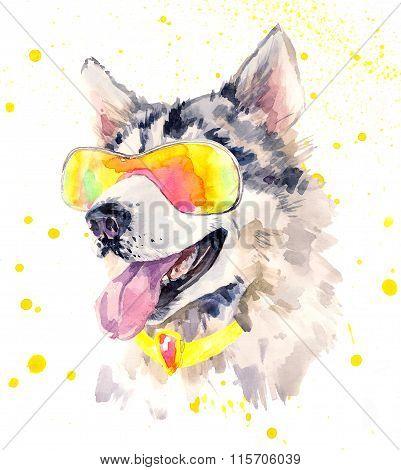 Watercolor siberian husky dog in cool sun glasses