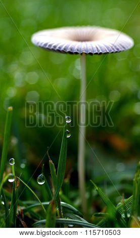 Mushroom or raindrops