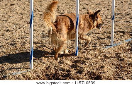 Dog Agility: Weave poles