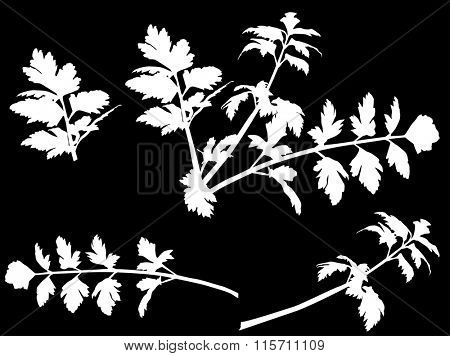 illustration with white celery isolated on black background