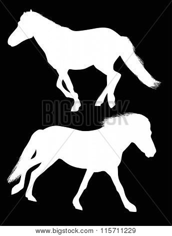 illustration with two horses isolated on black background