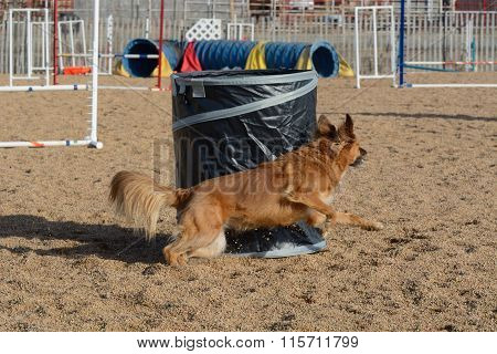 Dog running around agility barrel