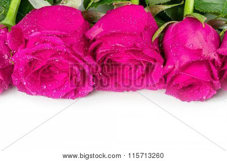 Three roses with dew drops on a white background