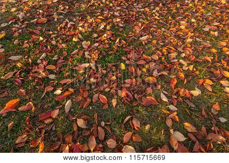 Fall Leaves On Grassy Ground