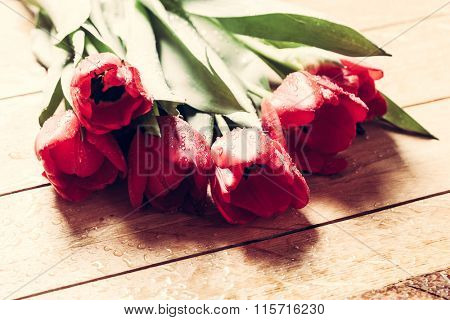 Fresh red tulip flowers bouquet on wood. Wet, morning dew. Natural spring or Valentine's Day, Mother's Day theme.