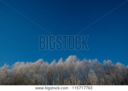 frosty winter day