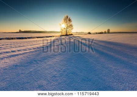 Winter Field With Withered Tree