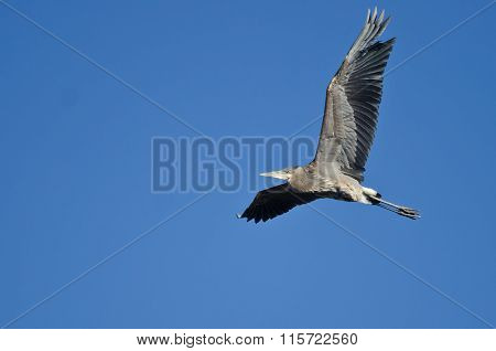 Great Blue Heron Flying In A Clear Sky