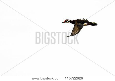 Male Wood Duck Flying On A White Background