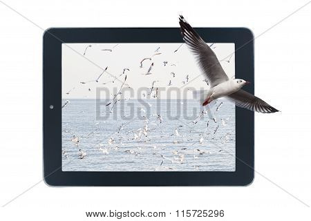 Seagulls Flying Out Of Picture In Tablet