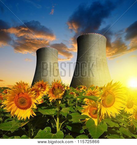 Nuclear power plant with sunflower field