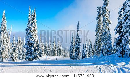 Skiers going down the hill among the trees