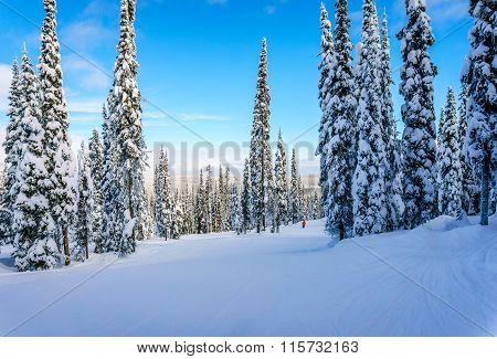 Winter landscape on the Ski Hill