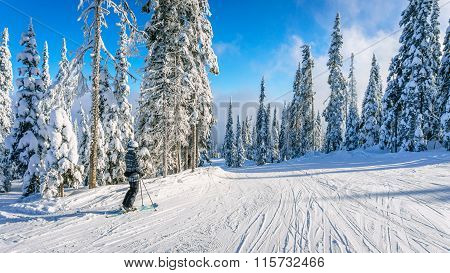 Woman on skis enjoying the winter landscape