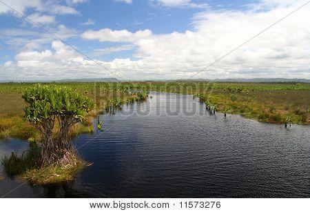 Madagascar wetland