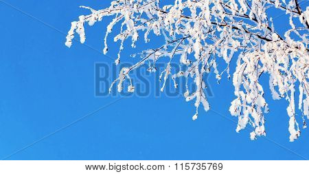 Branch Of Tree With White Snow And Brilliant Hoarfrost