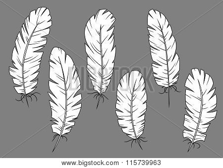 Quill pens icons with white fluffy feathers