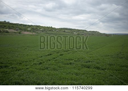 Green field and cloudy day.