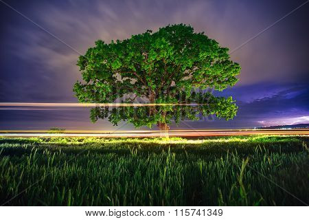 Big Green Tree At Night