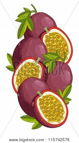 Passion Fruit isolated, Vector, composition.