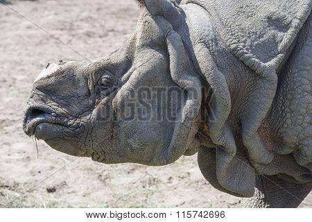 Rhinoceros Close Up